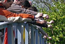 Photo of Игра в пустяки: как освоить любимый спорт Винни Пуха и его друзей