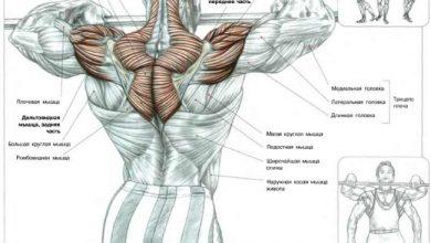 Photo of Анатомия трапеции и шейных мышц