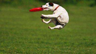 Photo of Тренируем собаку с пользой для себя