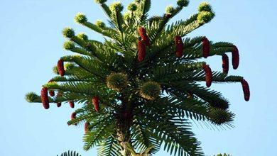 Photo of Топ-10 самых странных и удивительных деревьев на планете