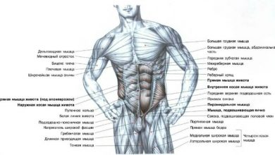 Photo of Анатомия мышц живота